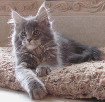 cat clinic of destin