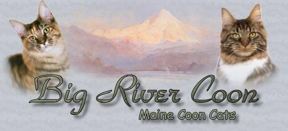 Big River Coon, Maine Coon Cats